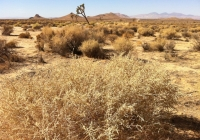 UltimateGraveyard Mojave Desert Brush